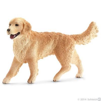Perro cobrador dorado hembra