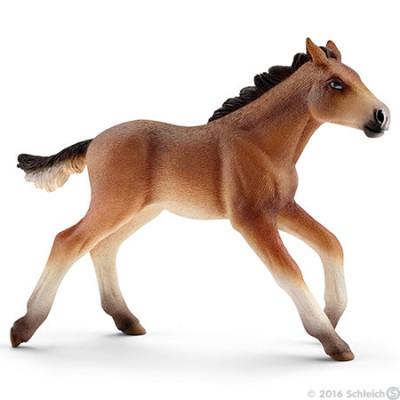 Potro Mustang