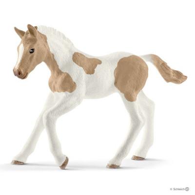 Potro Paint Horse
